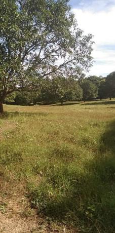 mango-farm-lot-bataan-big-2