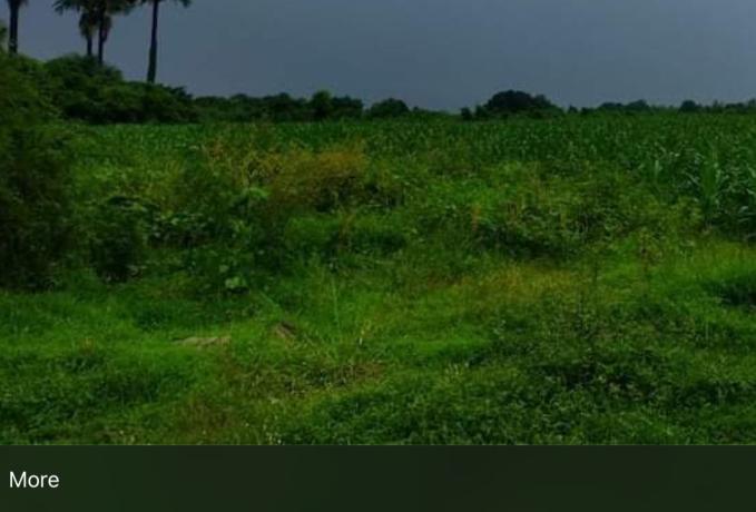 200-hectares-rice-fiel-big-0