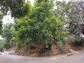 house-and-lot-for-sale-small-1